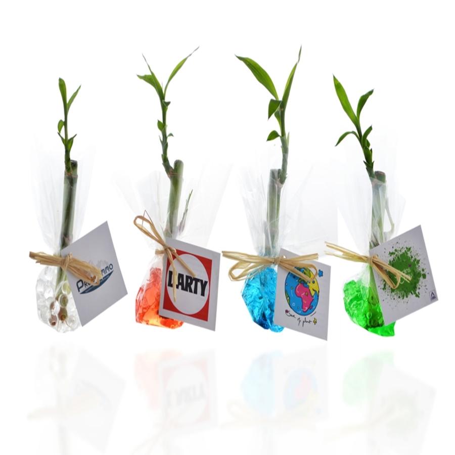 Bambou d 39 eau produits naturels phosphorescence for Plantes acheter ligne